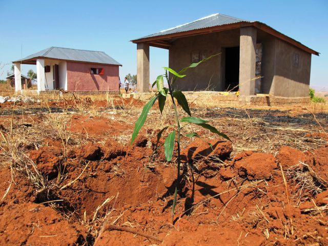 Plantación de frutales.