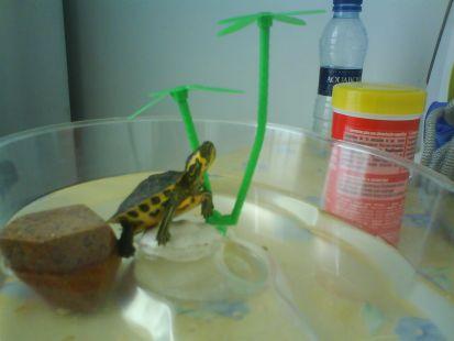 Mi tortuga cuando era pequeña
