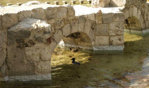 Antiguo Cauce