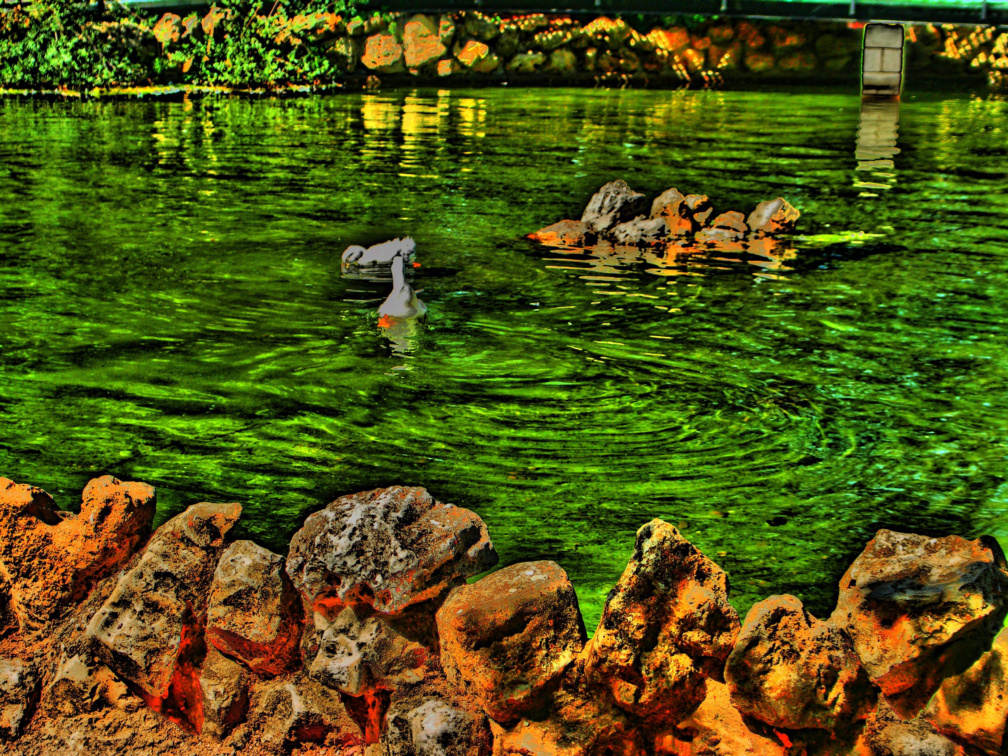 El estanque de los patos fotos de nuestras mascotas for Estanque para perros
