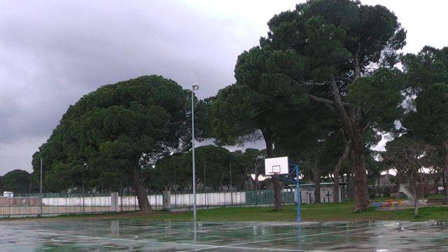 Arbol  centenario
