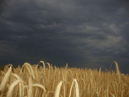 cereal y tormenta